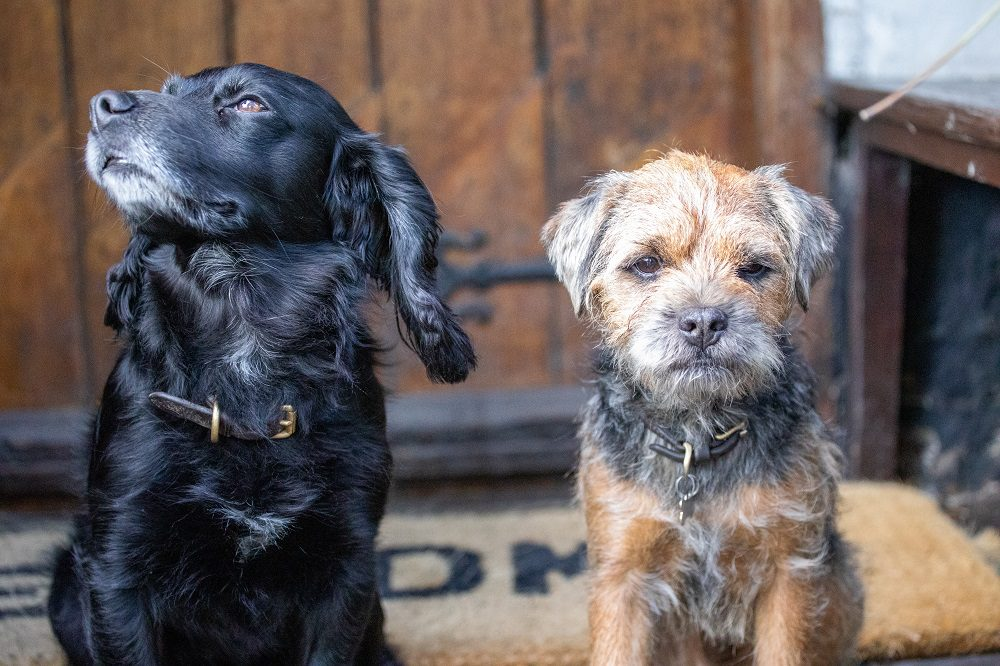 West Arms takes spot in top ten most dog-friendly pubs in Wales
