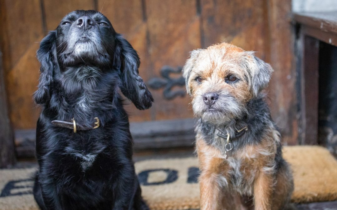 Best dog friendly country inn in North East Wales